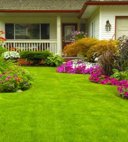 Austin landscape and yard maintenance