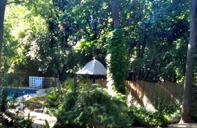 Austin tree maintenance
