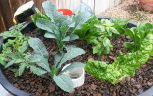 Aquaponics garden system from Paleface Feed and Garden Supply
