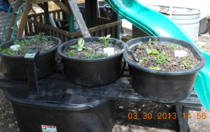 Newly installed aquaponics grow bed system in Bee Cave, TX