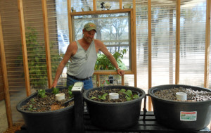Three bed aquaponics gardening system in spicewood, TX